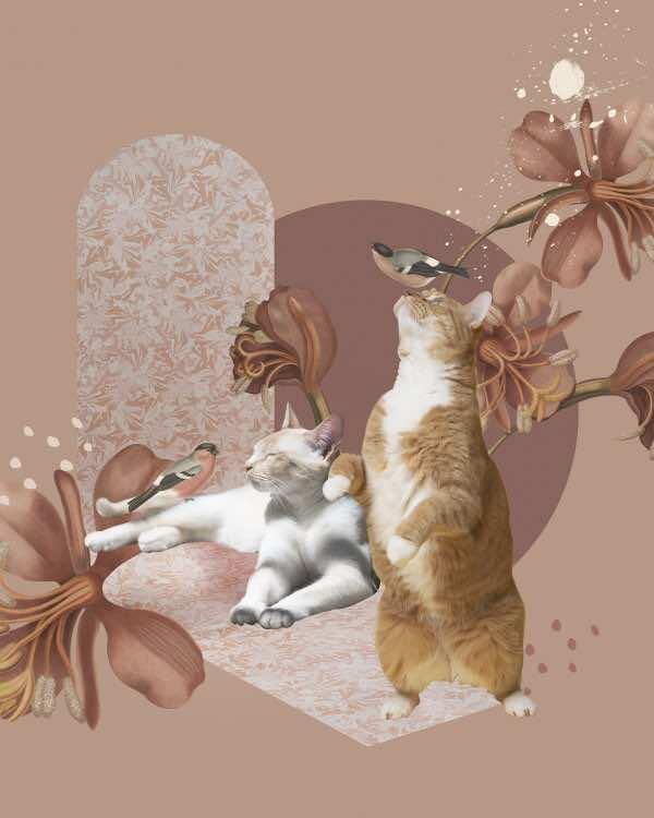 Oh Cats! – PLAKAT